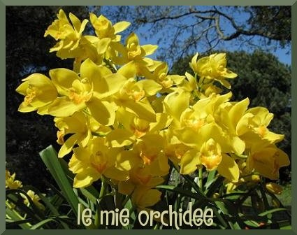 ORCHIEDEE2.JPG